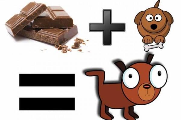 Cioccolato | Perché fa male a cani e gatti