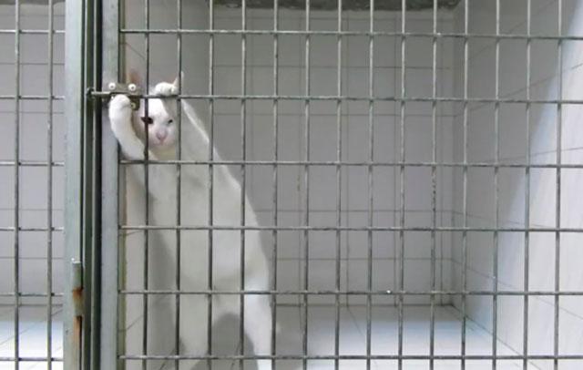 Video di animali divertenti: il gatto Chamallow evade dalla gabbia