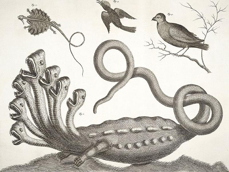 L'Idra esiste davvero! Le foto del serpente a due teste