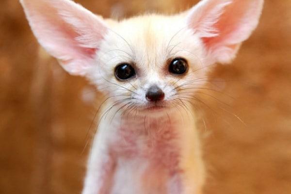 Animali curiosi: scopri le razze più piccole ed esotiche!