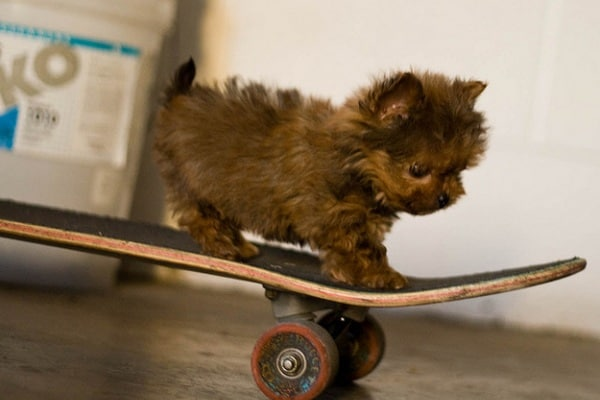 Curiosità animali | Anche gli animali vanno in skateboard!