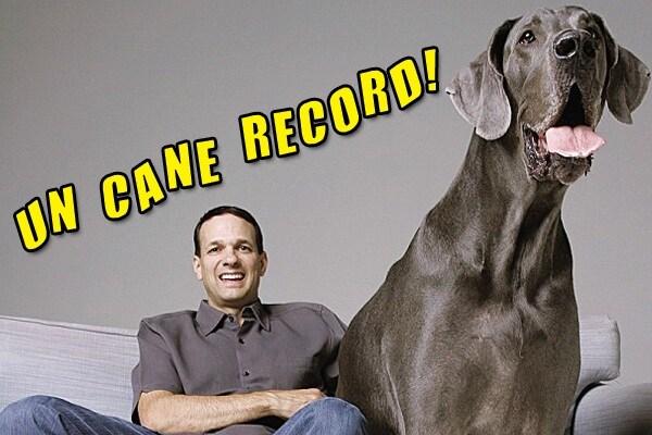 Record: il cane più grande del mondo | Guinness dei Primati