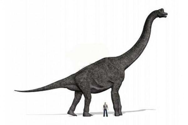 Dinosauri | Qual è stato il più grande di tutti?
