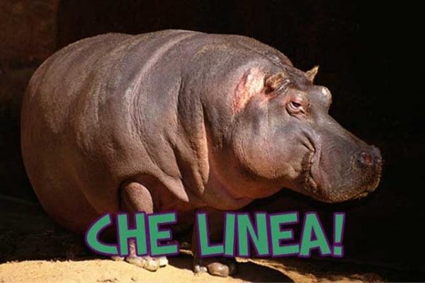 Pesa di più un ippopotamo o un rinoceronte?