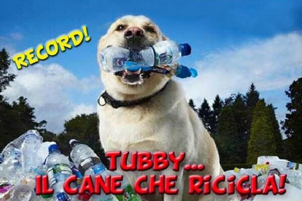 Curiosità animali | Tubby, il cane che ricicla la plastica