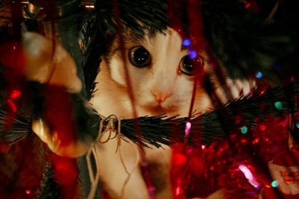 Curiosità animali: I gatti e il Natale!