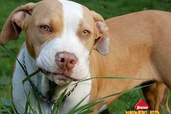 Curiosità animali | Perché a volte i cani mangiano l'erba?