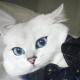 Occhi di gatto... blu | Le foto di Coby, il gatto che incanta i social! / Image 0