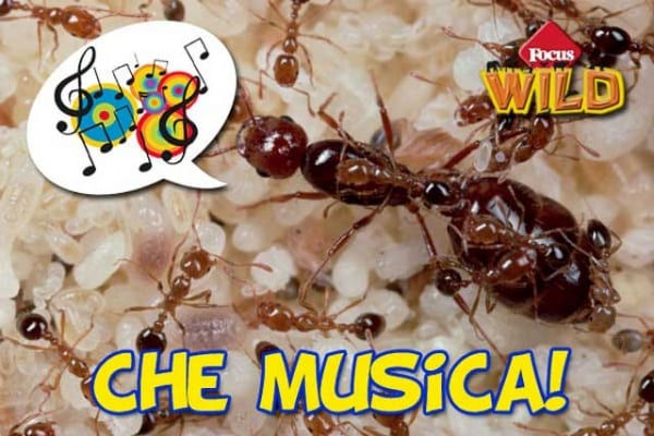 I suoni delle formiche | Un concerto può salvare loro la vita
