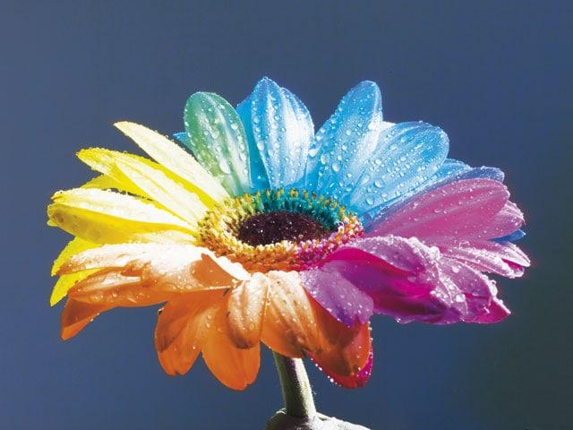 Fiori a 2 colori