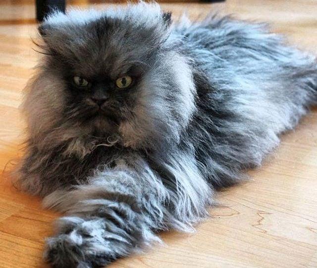 Record 2 | Il gatto dal pelo più lungo, l'uomo dalla bocca più grande, l'edificio più alto…