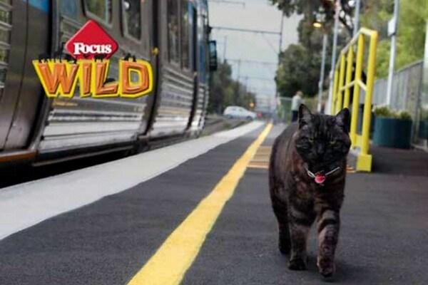 Curiosità animali | Il gatto che aspetta la padrona in stazione!