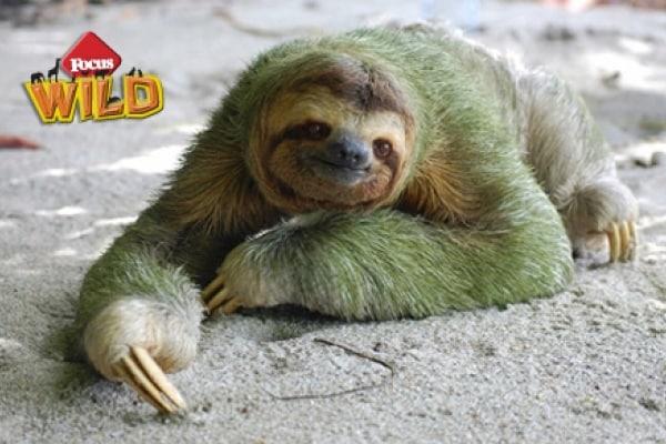 Curiosità animali: Animali dal colore assurdo | Focus Wild