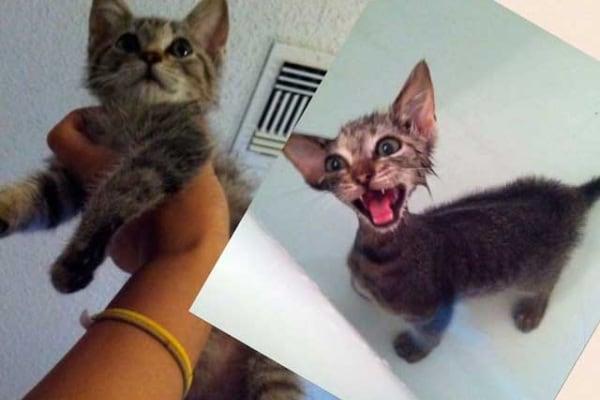 Foto divertenti di cani e gatti prima e dopo il bagno
