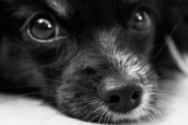 È vero che un anno del cane corrisponde a 7 anni dell'uomo?
