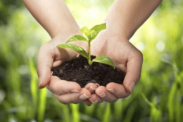 5 Giugno, la Giornata Mondiale per l'Ambiente