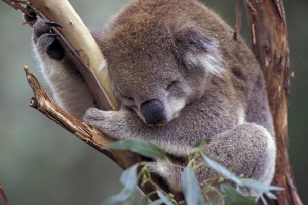 Animali, che dormiglioni!