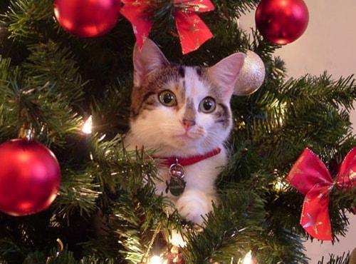 Immagini Natalizie Con Animali.Curiosita Animali I Gatti E Il Natale Focus Junior