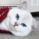 Occhi di gatto... blu | Le foto di Coby, il gatto che incanta i social! / Image 2