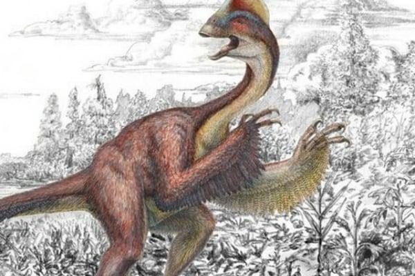 Alla scoperta del Pollo Infernale, ecco il pollo dinosauro!