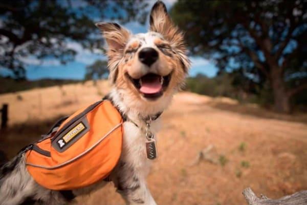 Una bella vacanza in campeggio col mio cane