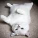 Occhi di gatto... blu | Le foto di Coby, il gatto che incanta i social! / Image 3