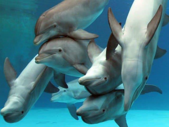 Lo sapevi che i delfini si drogano?