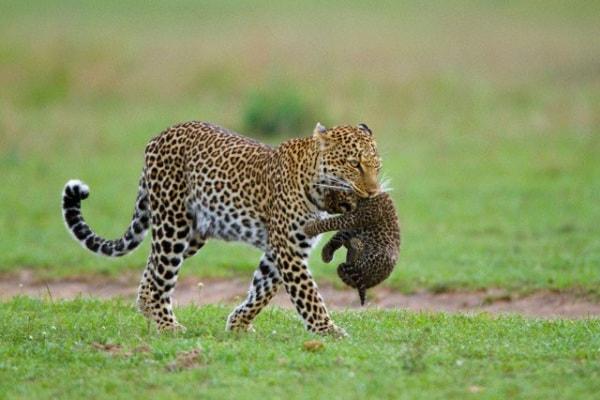 Nuovi arrivi nella vostra Grande enciclopedia degli animali! Ecco le foto