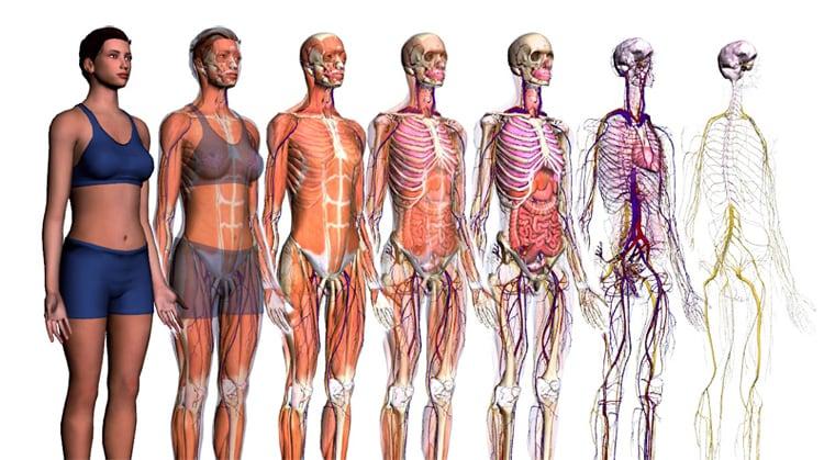 Il corpo umano | I suoi apparati e i sistemi visti da vicino