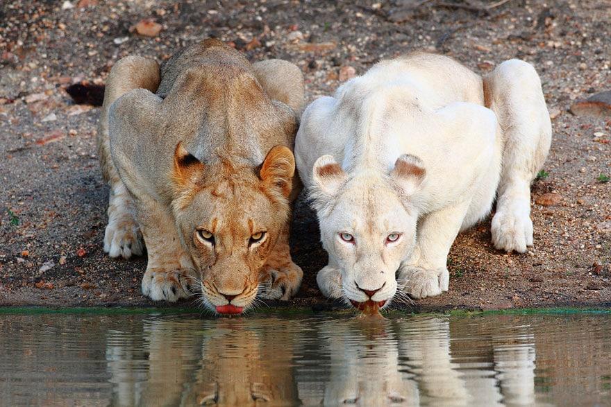 Animali… scoloriti | Che cos'è l'albinismo