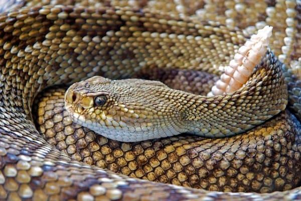 Il superpotere dei serpenti