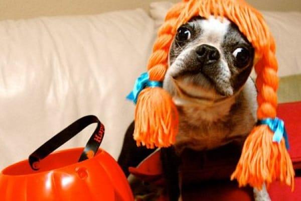 Amici animali: travestimenti da cani!