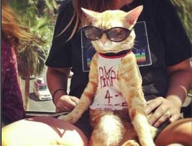 Anche i gatti vanno in vacanza!