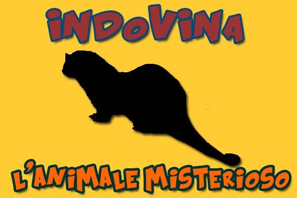 Gioca: indovina l'animale misterioso!