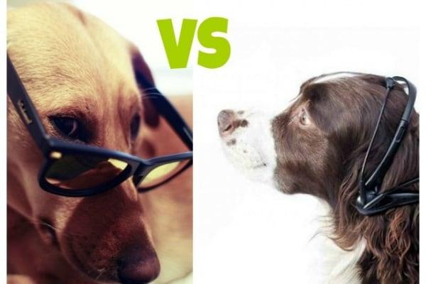 Invenzioni incredibili: le cuffie per far parlare i cani!