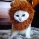 Occhi di gatto... blu | Le foto di Coby, il gatto che incanta i social! / Image 5
