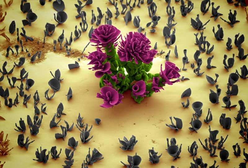 Nanofiori di cristallo | Entra nel giardino più piccolo del mondo!