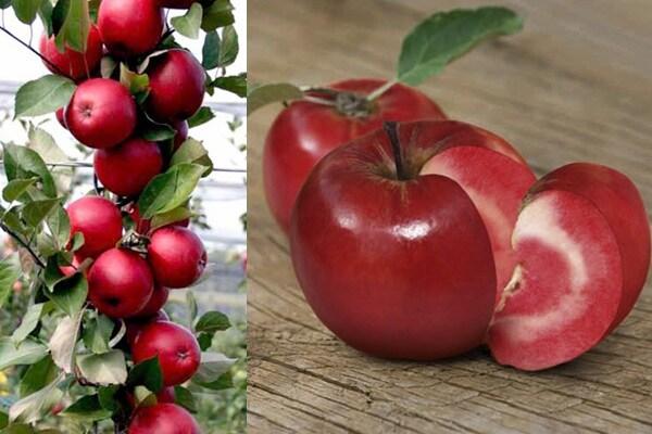 Alla scoperta della mela che si crede un pomodoro!