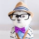 Toby LittleDude: il cane più hipster di Instagram / Image 6