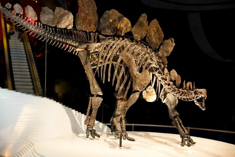 I musei di storia naturale più strani del mondo