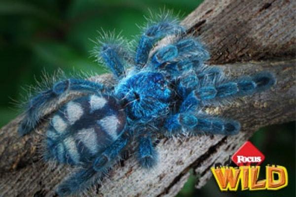 Curiosità animali: Come si difendono gli animali? | Focus Wild