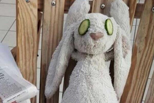 Trattamento Vip per un coniglietto peluche dimenticato in albergo