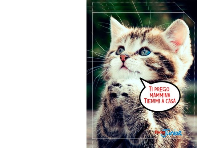 Risultati immagini per immagini per quaderni con copertina dei gatti o cani