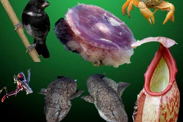 Natura | Nuove specie vengono scoperte in continuazione!