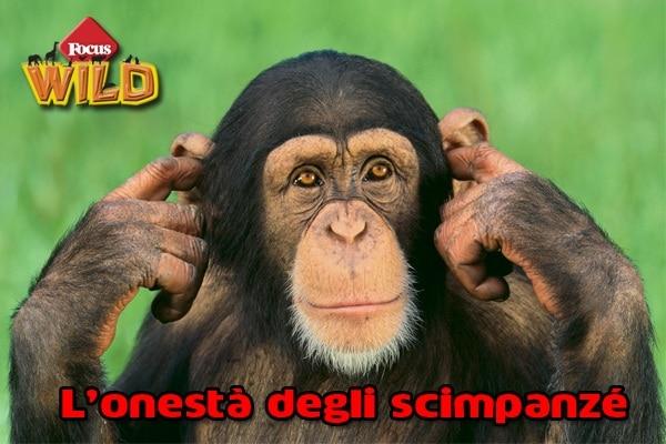 Curiosità animali | L'altruismo degli scimpanzé