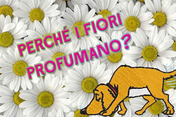 Perché i fiori profumano?