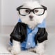 Toby LittleDude: il cane più hipster di Instagram / Image 8