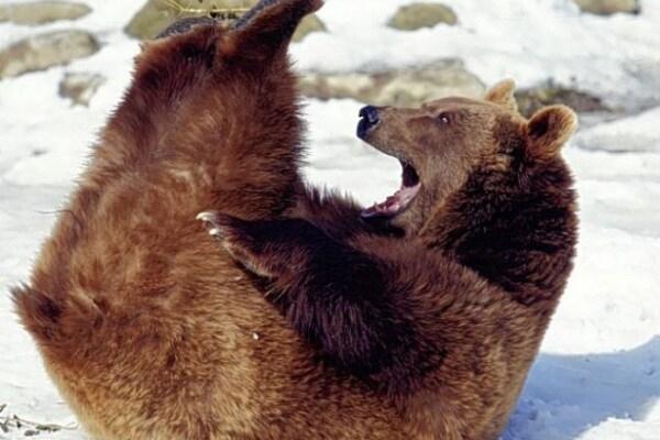 """""""Barze"""" selvagge! Ridiamo con gli animali!"""