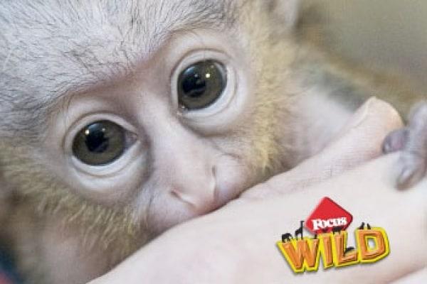 Curiosità animali: la scimmietta cerca mamma | Focus Wild