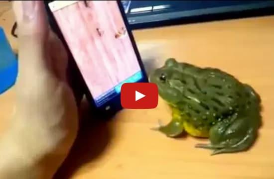 Video | Rana gioca con lo smartphone e mangia gli insetti del gioco